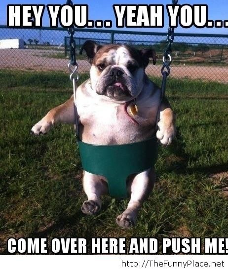 Hey-You-Come-Over-Here-And-Push-Me-Funny-Cute-Dog-On-Swing