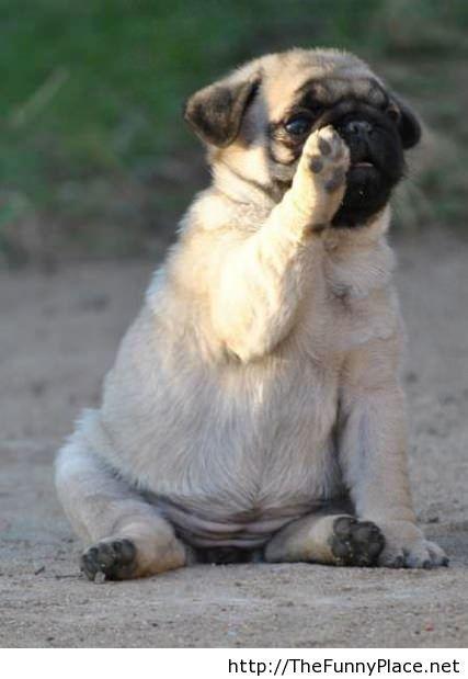 High five funny dog