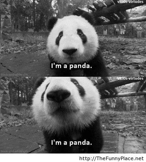 I am a panda, and I am funny