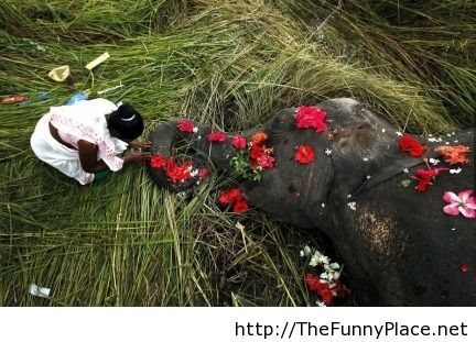 India awesome moment with a funeral for an elephant
