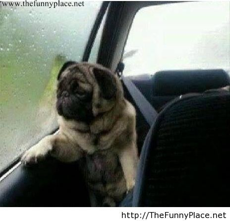 Its raining outside funny picture