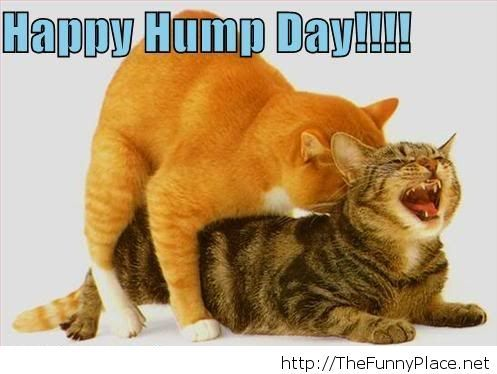 Its wednesday funny hump day