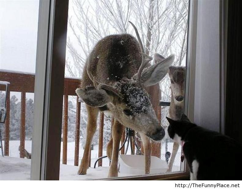 Let us in please, it s cold outside