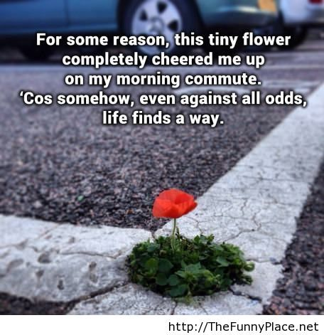 Life finds a way everyday