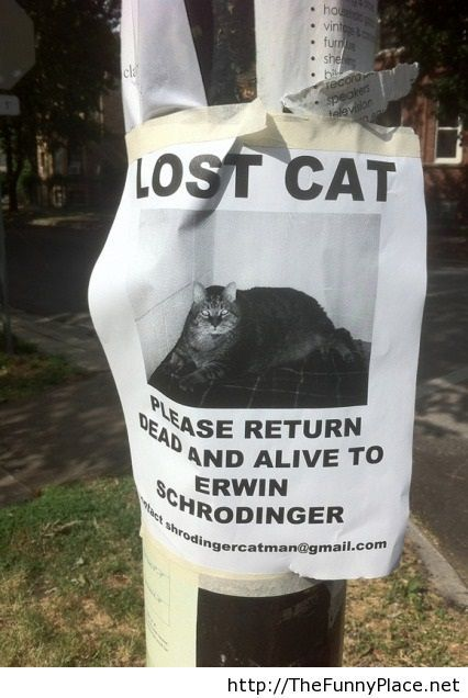 Lost cat, please return dead and alive