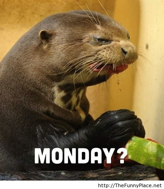 Monday again funny wallpaper with an animal