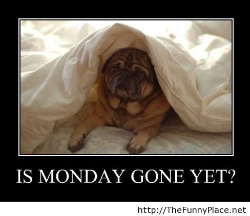 Monday is gone funny