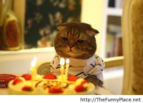 My cat love birthdays