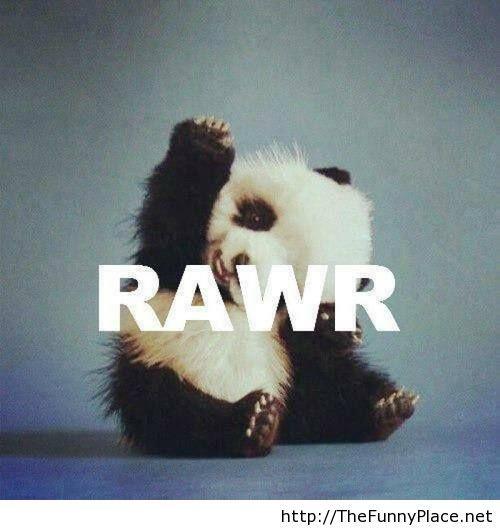 Panda wallpaper funny