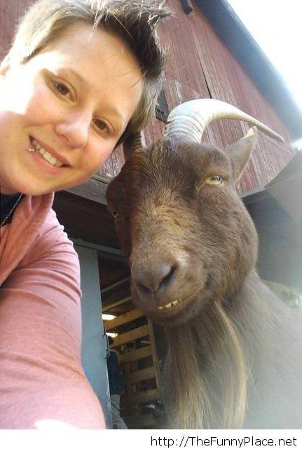 Photogenic goat, so funny!