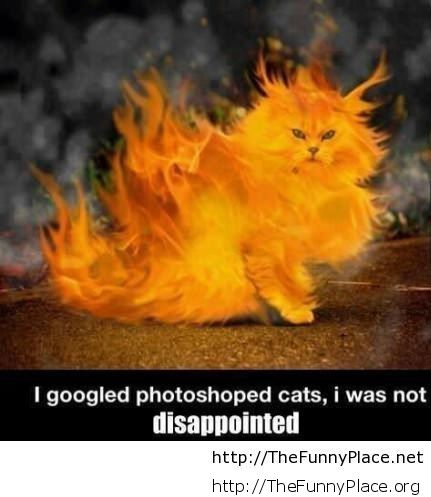 Photoshopped cat is awesome