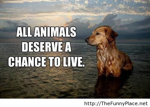 Funny Quotes About Animal Lovers : ... quotes animals funny animal quotes image animal quotes lover animal