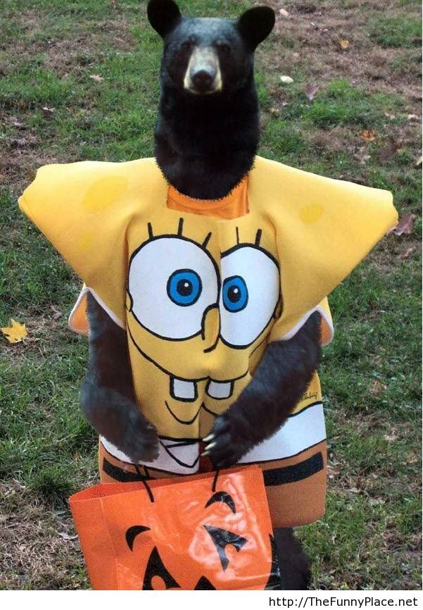 Spongebob halloween costume with a bear