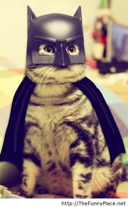 This is Batcat
