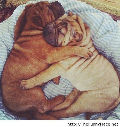 Two dogs sleeeping  like a human