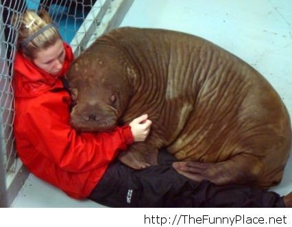 Walrus scary baby is scared!