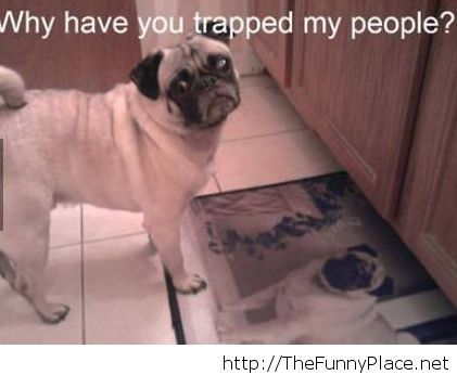 Why have you trapped my people