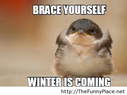 Winter is coming, brace yourself cute picture