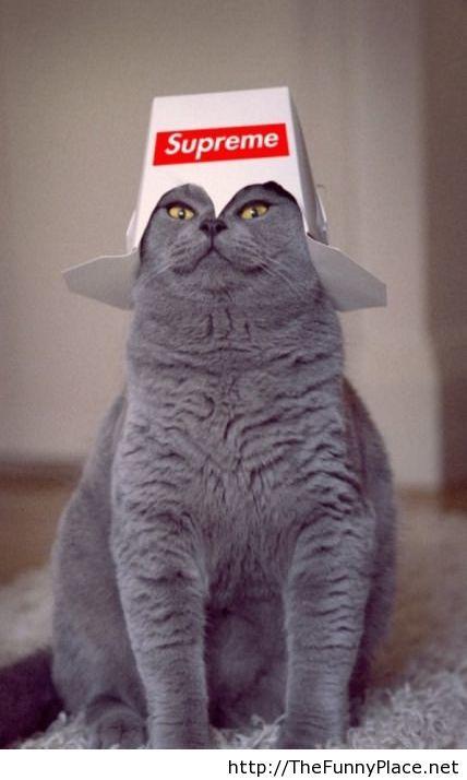 World cat queen