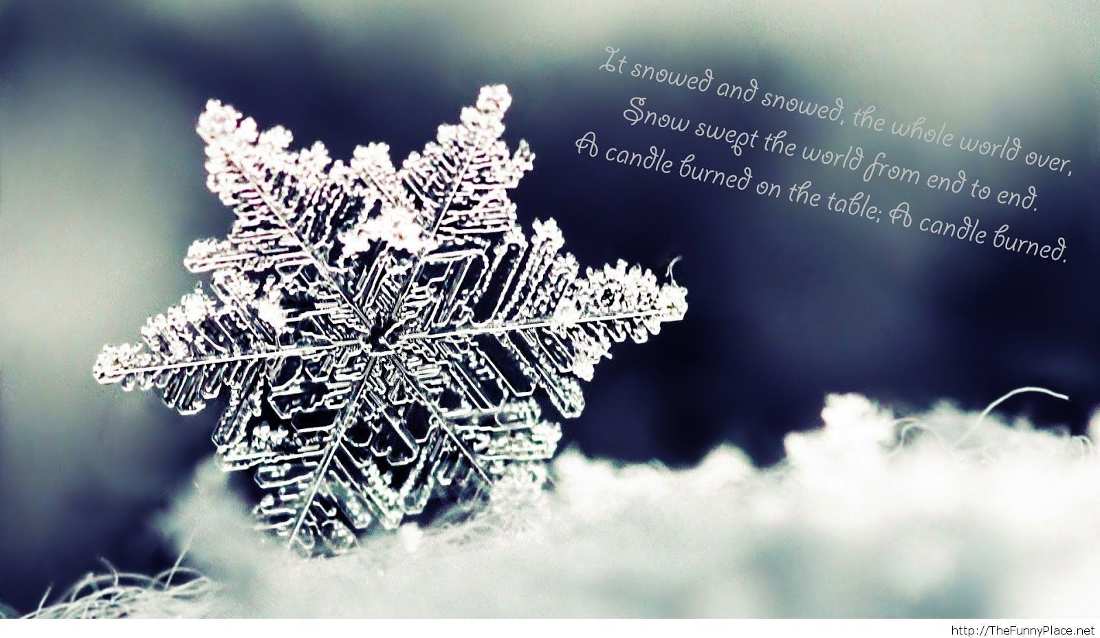 Amazing winter quote with image