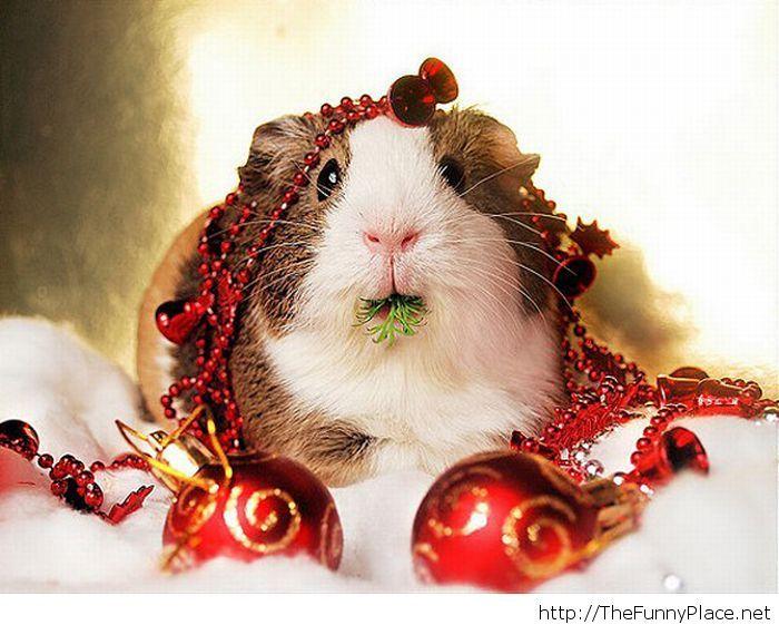 """Résultat de recherche d'images pour """"christmas soon"""""""