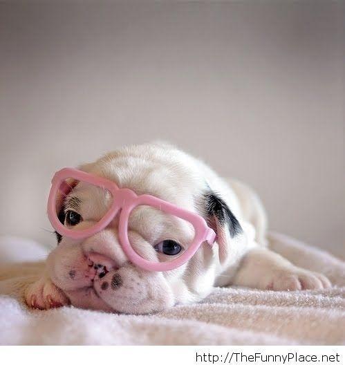Classy dog pic