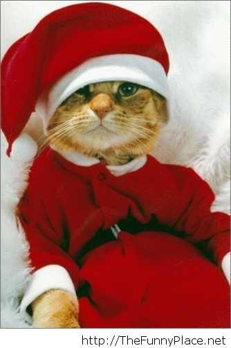 Funny-Christmas-11