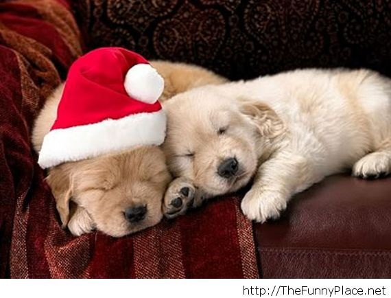 Funny dogs ready for Christmas