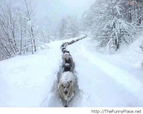 Funny winter 2014 image