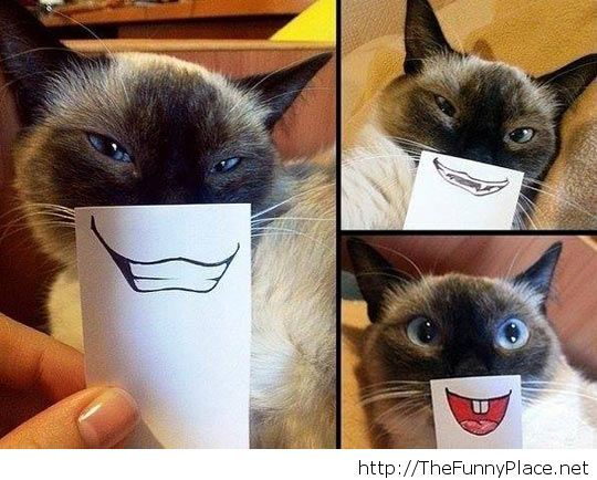 Grumpy cat is happy!