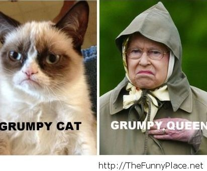 Grumpy is everywhere