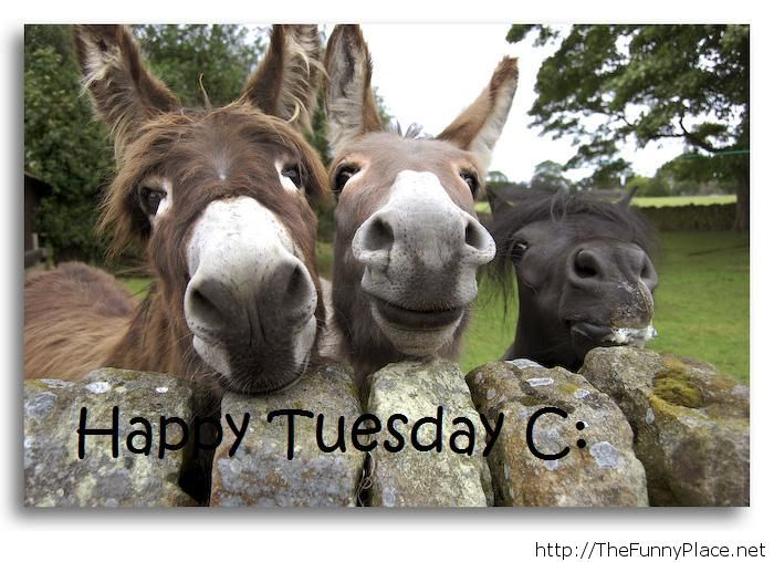 Happy Tuesday Image