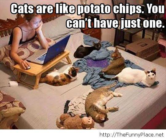 Havint cats...