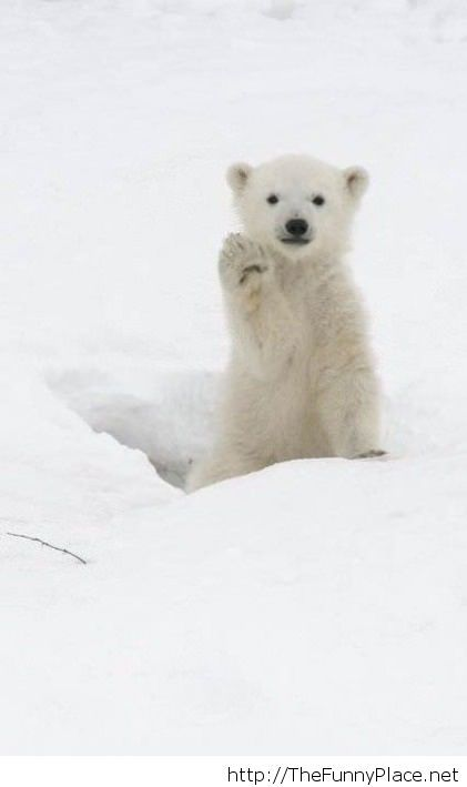 Hello funny picture with a bear