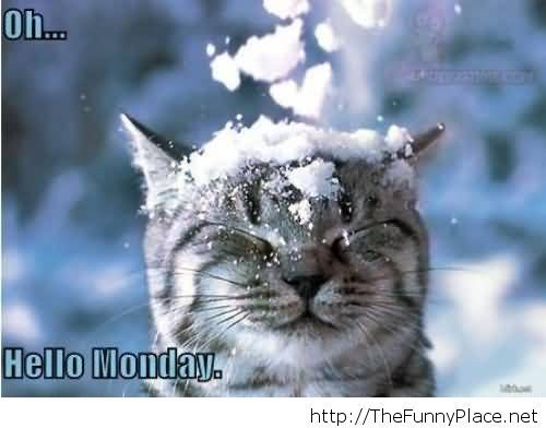 Hello monday funny picture