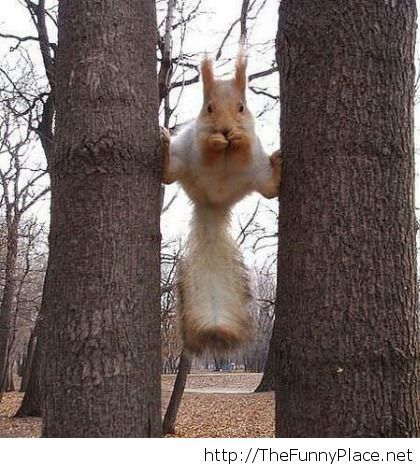 Jean Claude Van Damme in a squirell