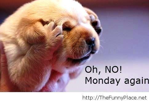 Monday again funny animal