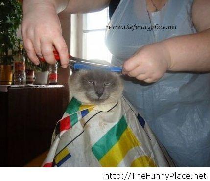 Not impressed cat