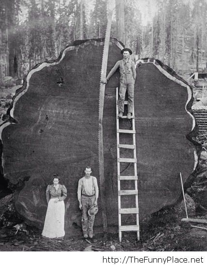 Overly manly people with lumberjacks