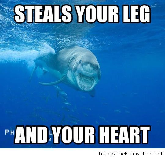 Photogenic shark