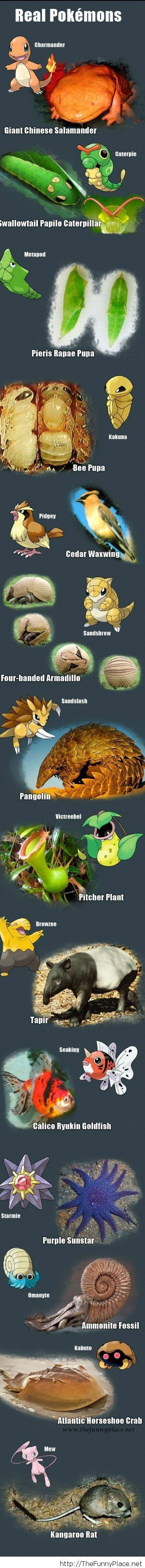Pokemons in real life