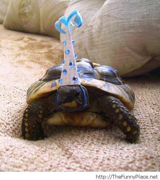 This turtle is awesome