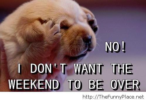 Weekend over funny image