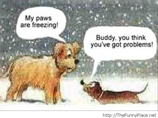 funny-christmas-pictures-3