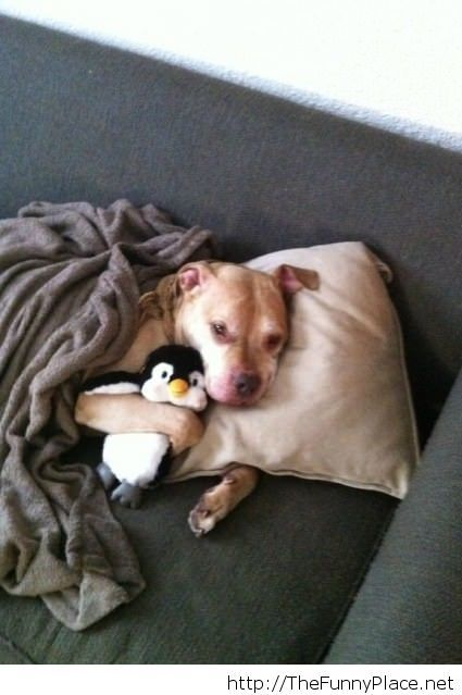 A dog and his penguin