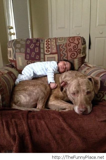 A pitbull and a baby