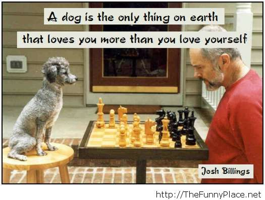 Awesome 2014 dog quote