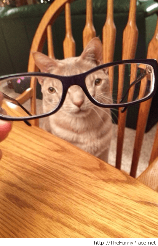 Awesome glasses dude