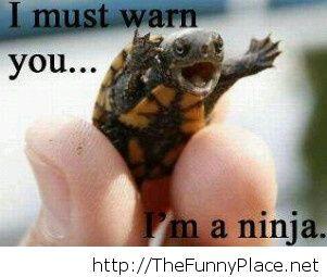 Because I'm a ninja