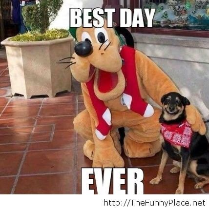 Best day at disney for my dog